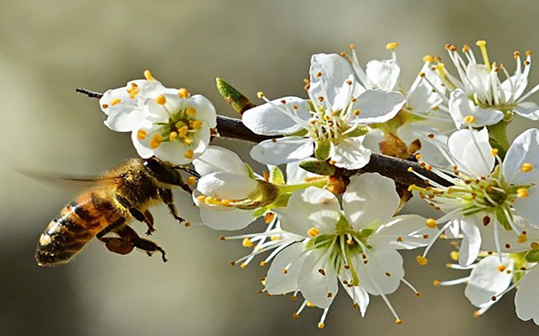 How Oracle and The World Bee Project are Using AI to Save Bees