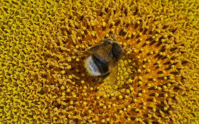The World Bee Project hive network aims to be the first to track pollinators globally