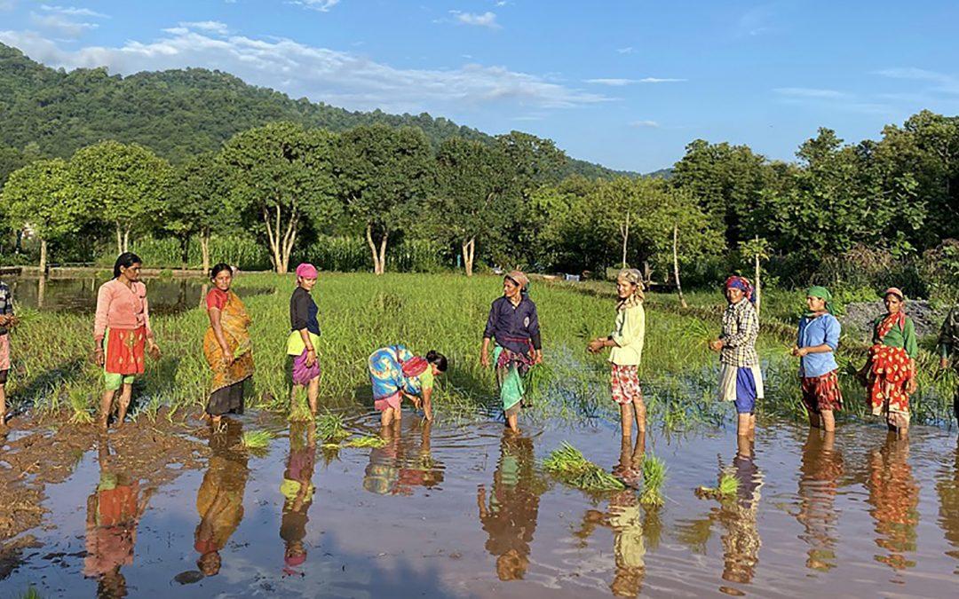 'Super Farm', North India