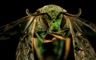 World Bee Day: How to collect big data (on tiny creatures)