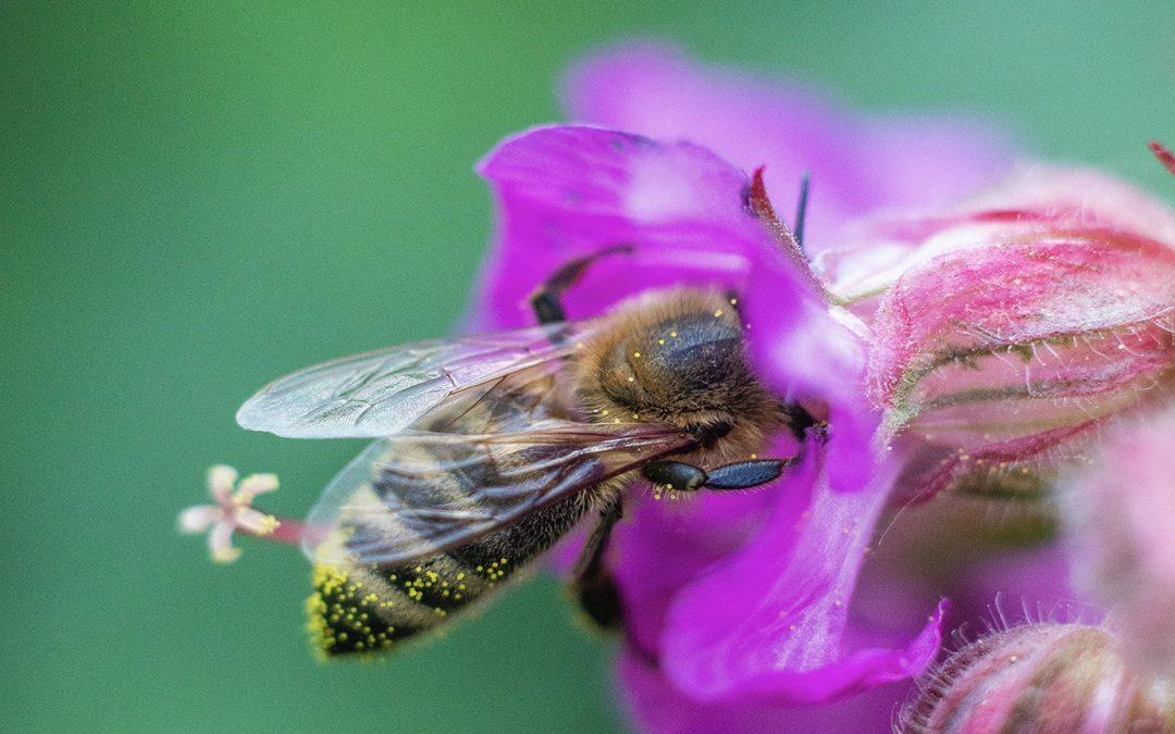 World Bee Mark©