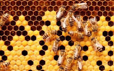 How Artificial Intelligence, IoT And Big Data Can Save The Bees