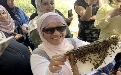 Bees in East Jerusalem