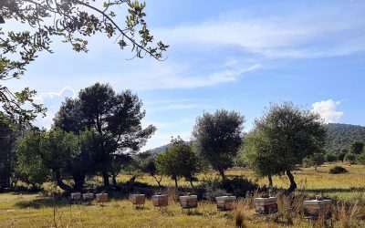 Projecte Equilibri, Spain
